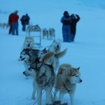 My dog sled team!