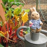 Peter Rabbit in the Kitchen Garden