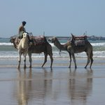 view f the beach and the horses and camels