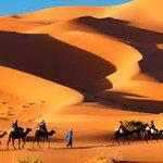 trips in desert