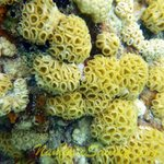 Abundant and healthy coral!