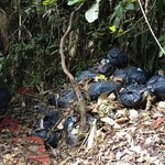 Rubbish bags deposited by staff