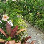 Pathway gardens