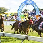 Experience the thrill and excitement of live horse racing.