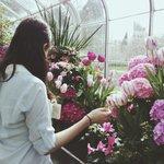 tulip room