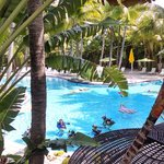 Lush beautiful pool