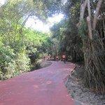 Bike Path you take on Bike Tour