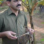 Mr Narasimhan and his honey bee