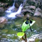 Waterfall no 7