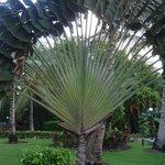 unusual palm