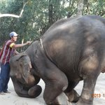 mahout just about to get back on his elephant