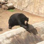 I see Bears.