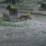 Hailstorm!!! Happens every 50 years or so