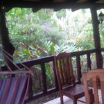 lovely jungle outside our bungelow balcony
