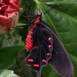 butterfly in exhibit