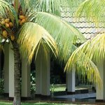 the palm trees in the beautiful gardens
