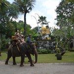 Elefant ride