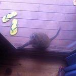 Un singe qui voulait rentrer dans notre chambre