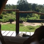 Elephants from our room