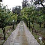 lemon-tree lined entrance drive