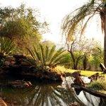 Rock pools in the subtropical garden