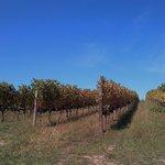 Autumn Vineyards at Creation Wines