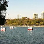 Swan boats on the lake