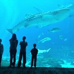 Our kids in front of the whale shark