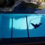 la piscine bien agréable