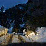 Way to Sojha from Jalori Pass.