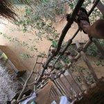 Stairs to Treehut