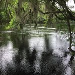 Suwannee River from a trail that runs along the river at the park