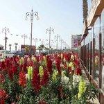 Larnaca is beautiful the year round!