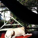 watch dog :) view of balcony