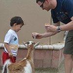 Feeding the Goat