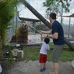 Feeding the Bear