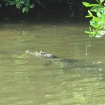 while fishing a croc was fishing too