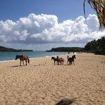 Horses at Sun Bay
