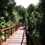 wooden walkway from our room to main area