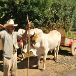 Costa Rica ox cart