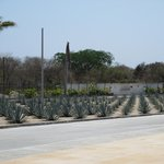cactus field outside airport