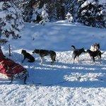 Our dog sled team