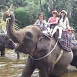 Fun Elephant ride