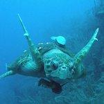 Turtle Dive Bomb