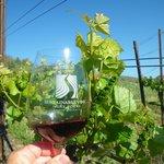 Tasting in the vineyard