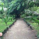 The island path