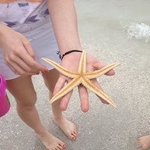 Starfish found and released by another beach walker.