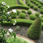 Our grounds have a beautiful Fleur-de-lis garden and topiary horse with antique carriage