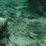 Snorkeling at Mangel Halto Reef