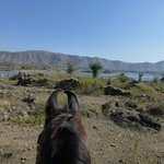 Seenlandschaft mit Marwariohren
